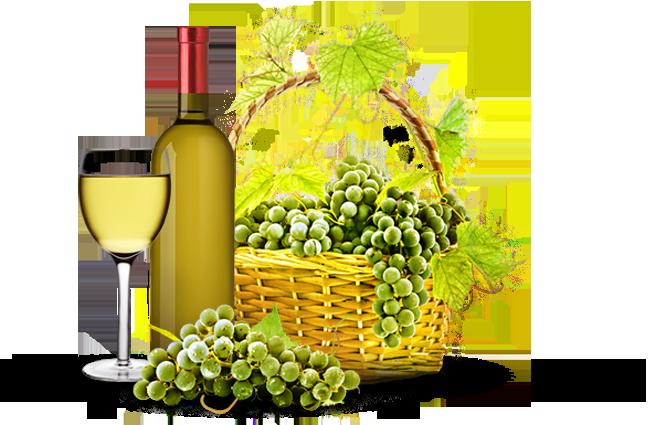 Gourmet Cullera Vinos